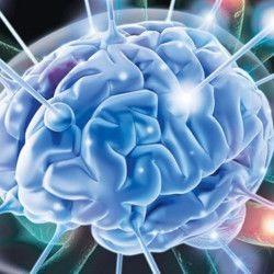 Реакция кровообращения на мозг