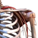 Периартрит – виды, симптомы и лечение
